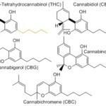 La réalité est que le cannabis contient de plus en plus de THC.